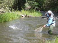 Fly fishing the Cimarron River.  Fly fishing in New Mexico